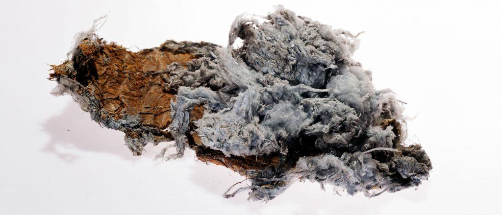 Specimen of asbestos